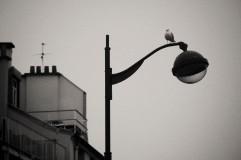 bird on lamp vintage